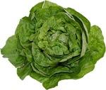 lettuce-5611