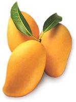 Mango_Pulp95326663